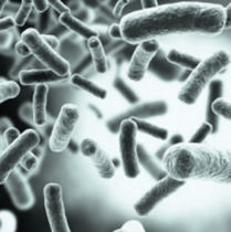Kit di test di malattie infettive / CMV / per DNA / per PCR real-time