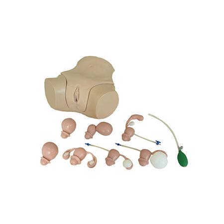 simulatore didattico / per cure ginecologiche / femminile / pelvi
