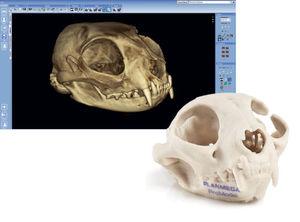 software di anatomia