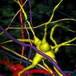 software di analisi / di visualizzazione 3D / di misura / con sistema di tracciatura