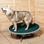 tavoletta d'equilibrio veterinaria
