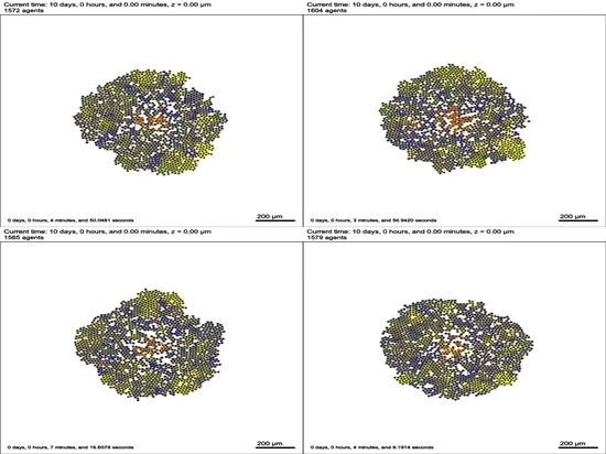 Simulazioni computazionali per guidare la terapia del cancro
