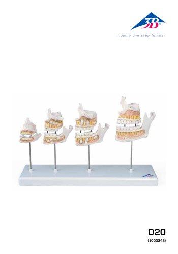 D20 Evoluzione dentatura